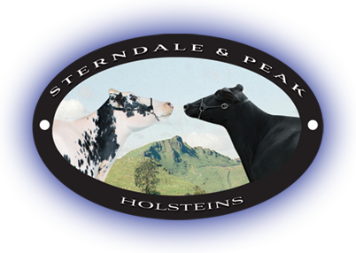 Sterndale and Peak Holsteins