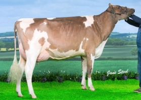 Sterndale Ladd Airy Red VG88 VG89-MS 2YR